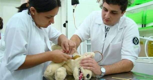 Curso De Auxiliar De Veterinaria E Pet Shop Com Certificado Valido